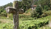 viñedo de Pago de Bemil (sucesores de Benito Santos)